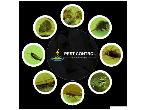 Pest Control Cremorne