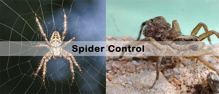 Spider Control Cremorne
