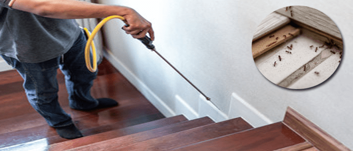 Same Day Ants Control Service