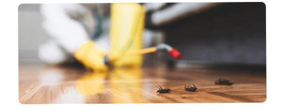 Pest Control Company Cremorne